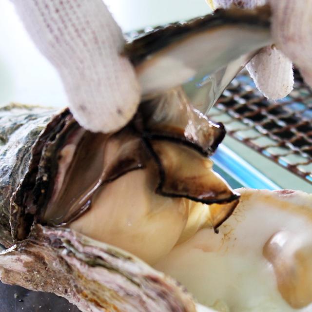 せむら牡蠣の特長2